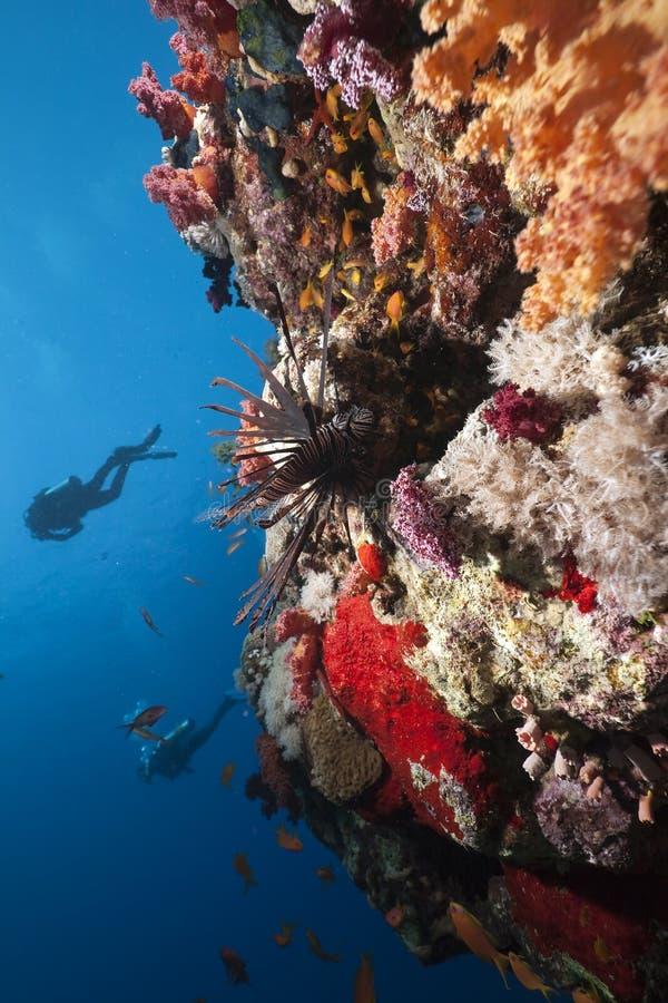 Lionfish, océan et plongeurs image libre de droits