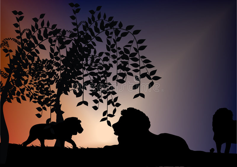 Download Lions stock vector. Illustration of predatory, observe - 5139653