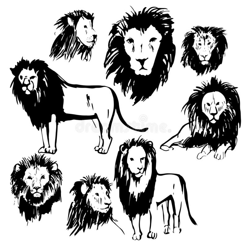 Lions tirés par la main Illustration de croquis de vecteur illustration de vecteur