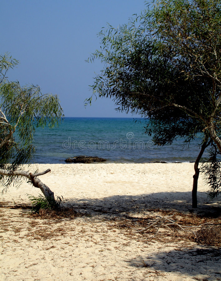 liopetria na plaży obrazy stock
