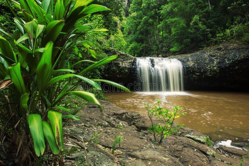 Lip falls. In Beechmont, Queensland, Australia. Located in the Denham Reserve royalty free stock photo