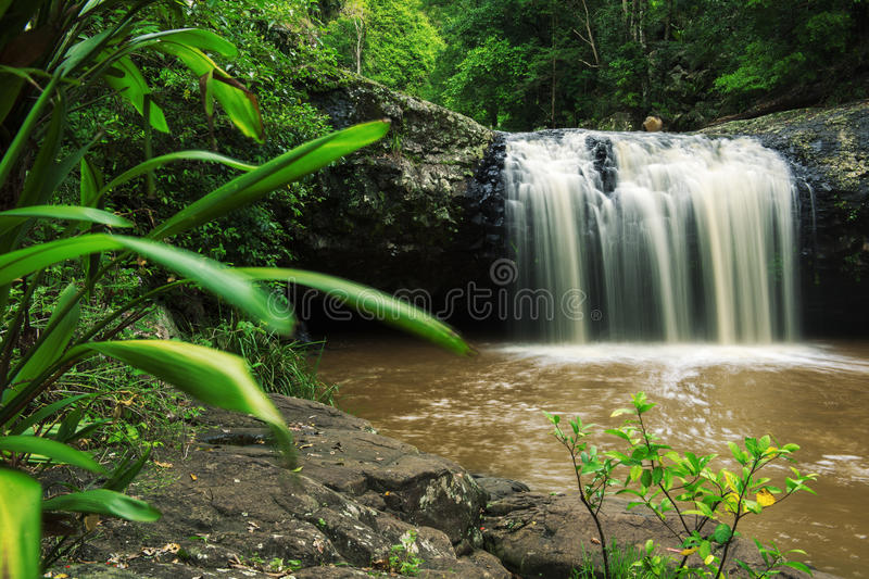 Lip falls. In Beechmont, Queensland, Australia. Located in the Denham Reserve royalty free stock images