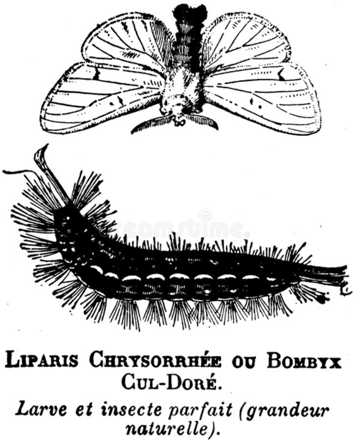 Liparis-oa Free Public Domain Cc0 Image