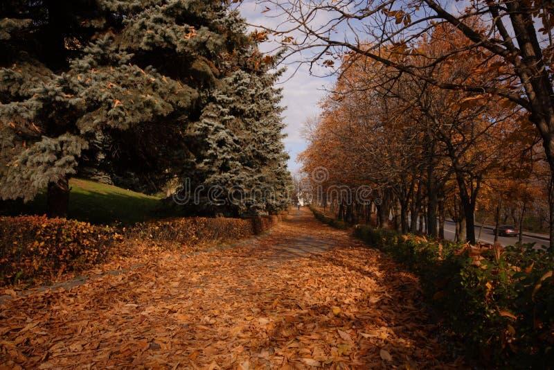 Download Lipetskpark fotografering för bildbyråer. Bild av orange - 3535555