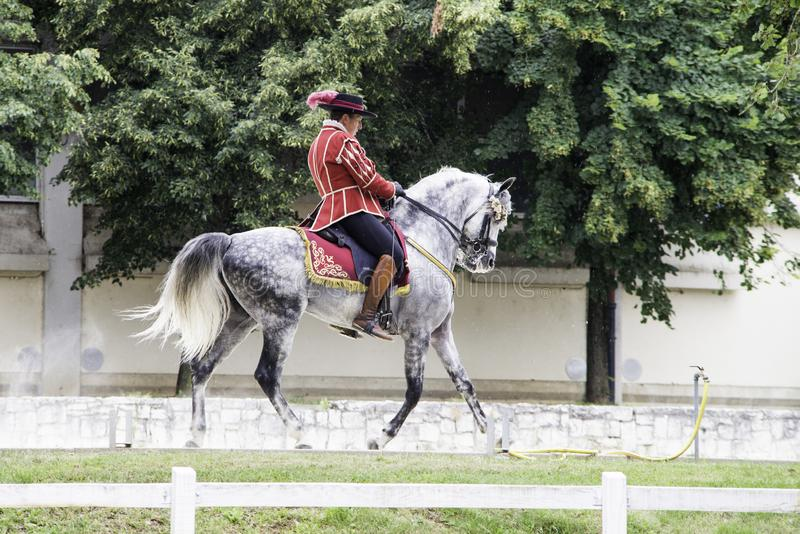 Lipica Slovénie, le 21 juillet 2018, cavalier espagnol de cheval avec son cheval pendant la formation publique École d'équitation photos stock