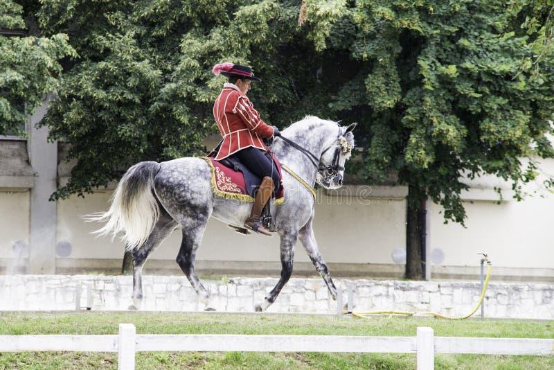 Lipica Slovenië, 21 Juli 2018, Spaanse paardruiter met zijn paard tijdens openbare opleiding Spaanse manege stock foto's