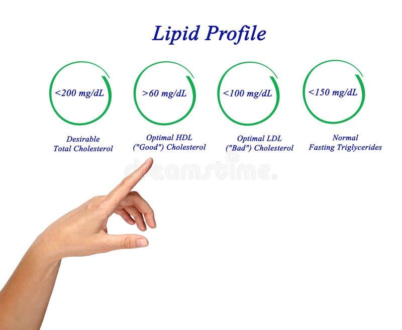 Lipid profile stock image