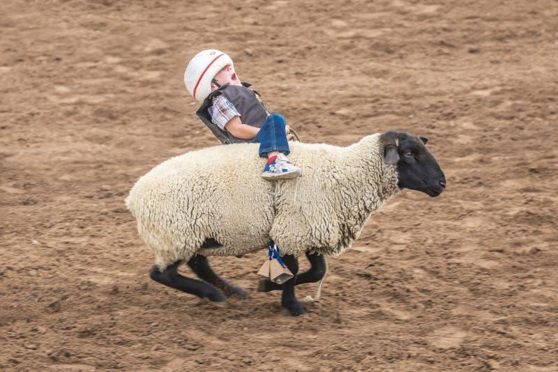 LIPIEC 22, 2017 NORWOOD KOLORADO - Młodzi kowboje jadą cakle podczas San Miguel Basenowego rodeo, San Byk, mężczyzna obraz stock