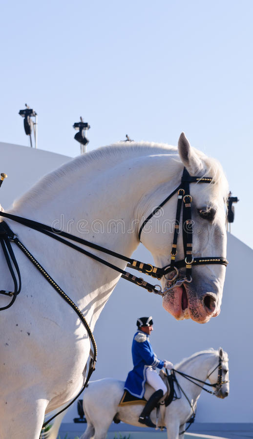 Download Lipizzan Stallions show editorial photography. Image of colorful - 17760792