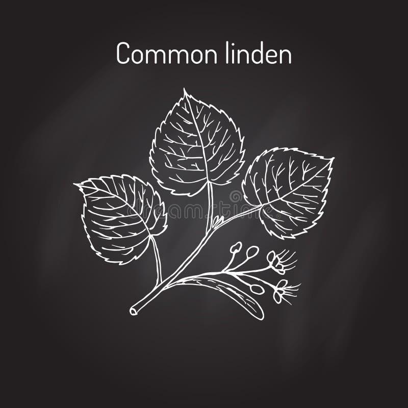Lipowa gałąź z liśćmi i kwiatami ilustracja wektor