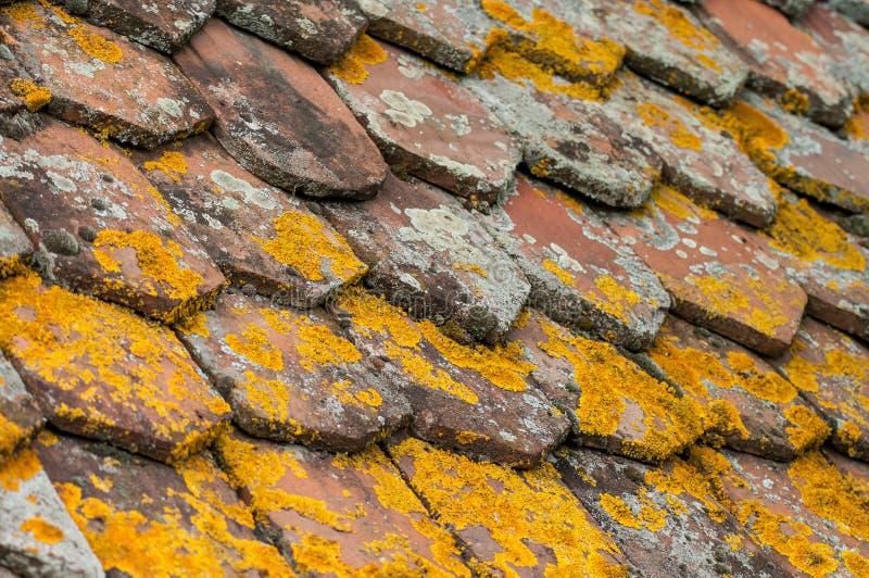 Liquen en las tejas de la terracota en el tejado fotografía de archivo