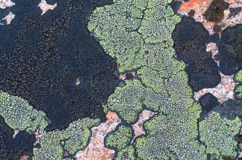 Liquenes del color verde y negro en la piedra el granito for Granito en piedra