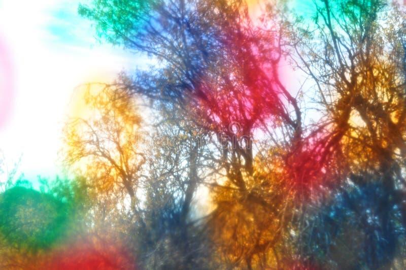 Liquid light forest royalty free stock photo