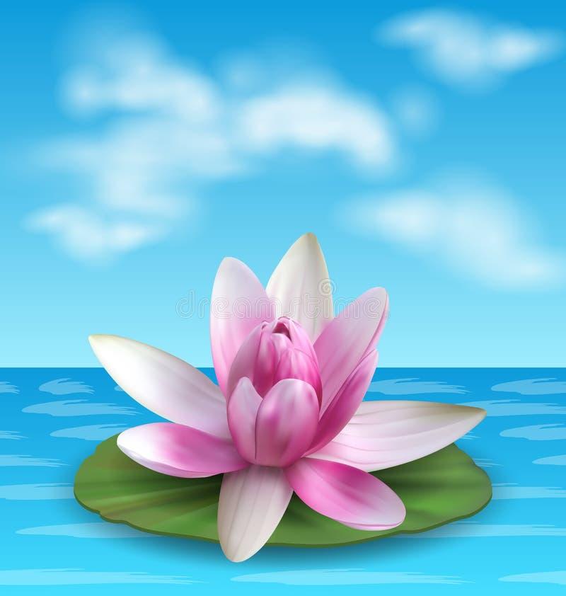 Lirio de agua, Nenuphar, Salpicón-muelle, Lotus rosado en la hoja verde Flor exótica stock de ilustración