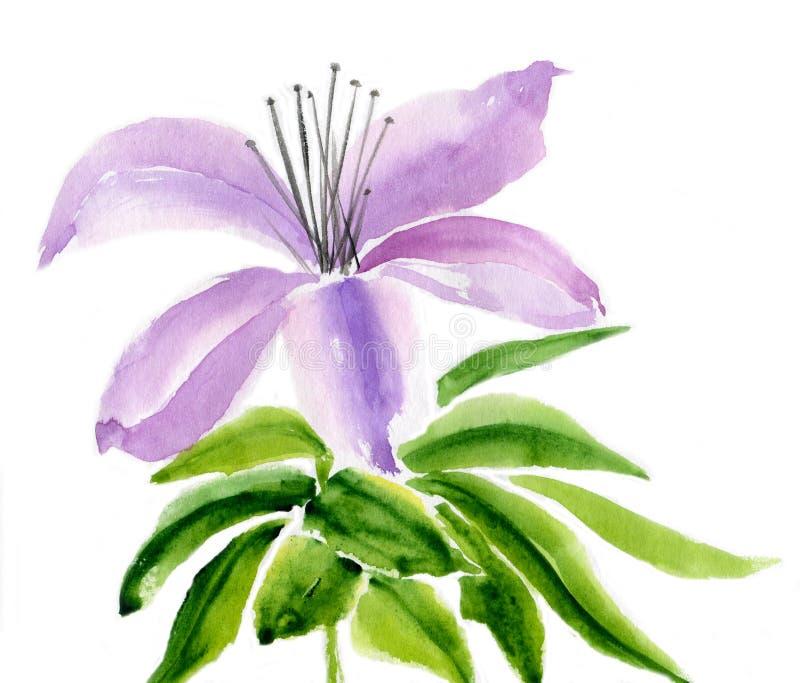 Lirio de la lila stock de ilustración