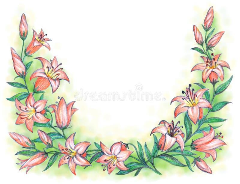 Lirio rosado delicado Gráfico de lápiz ilustración del vector