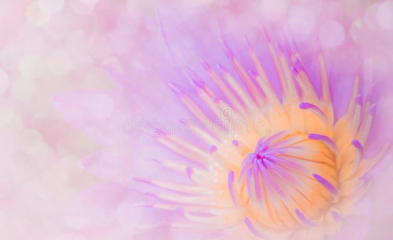 Lirios abstractos del loto del estilo, tono dulce El concepto de diseño del fondo rosado suave fotos de archivo