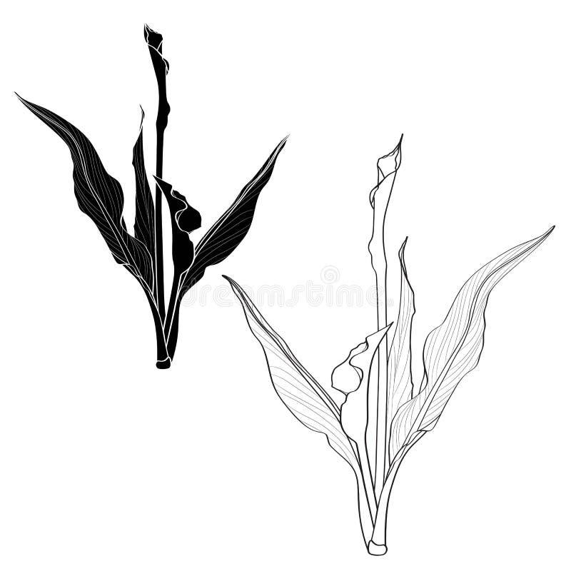 Lis de callas décoratifs avec des feuilles Ligne fleurs noires et blanches ensemble, éléments de conception illustration libre de droits