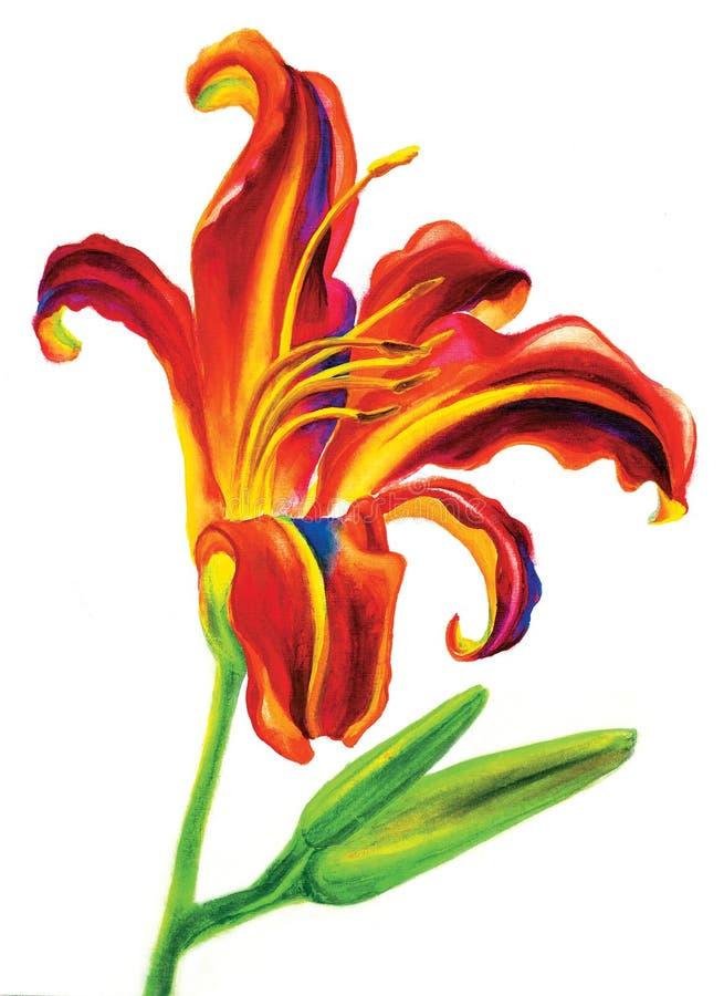 Lis de fleur images stock