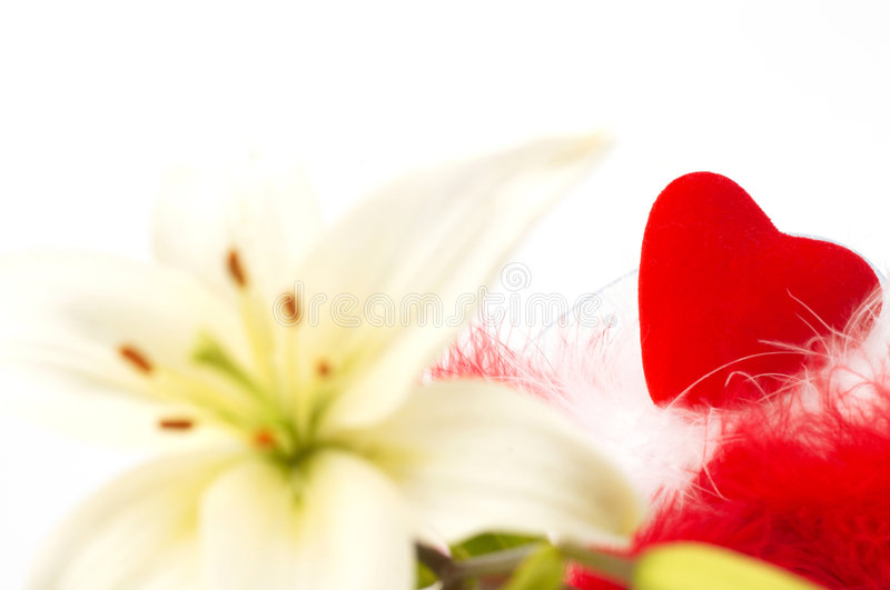 Lis et amour images libres de droits