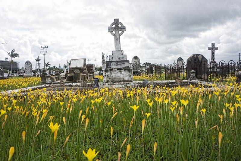 Lis jaunes de pluie dans le cimetière photo libre de droits