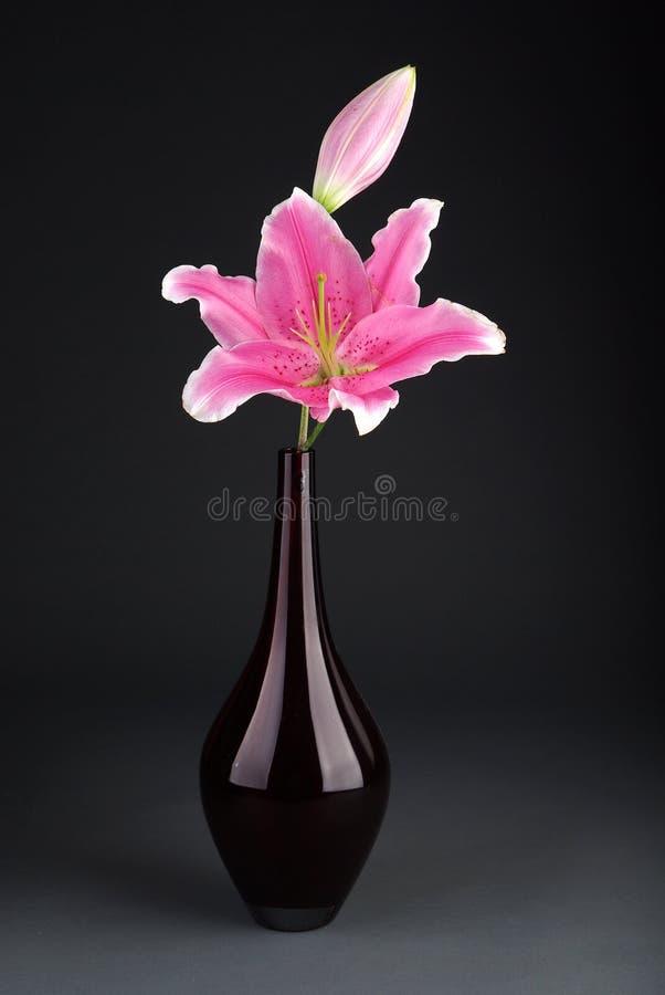 Lis rose dans un vase rouge avec le fond gris photo libre de droits