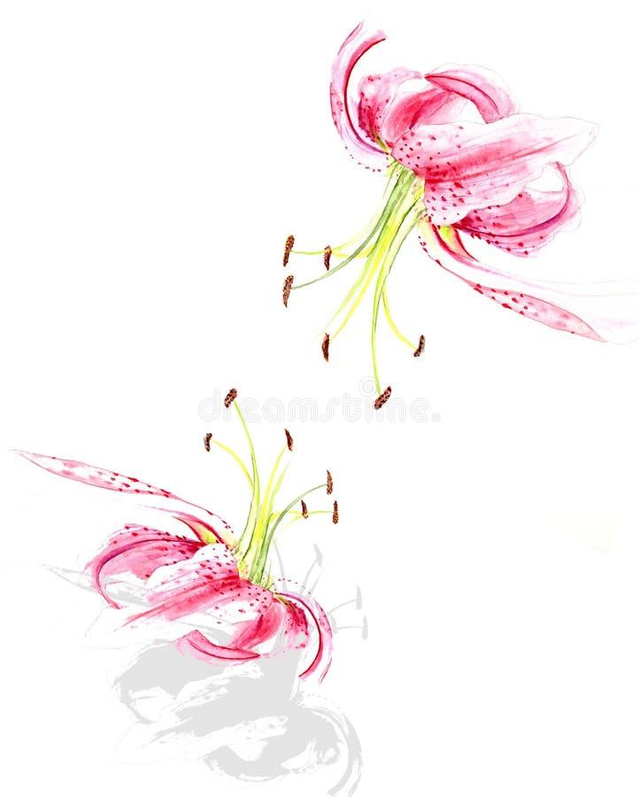 Lis roses illustration de vecteur