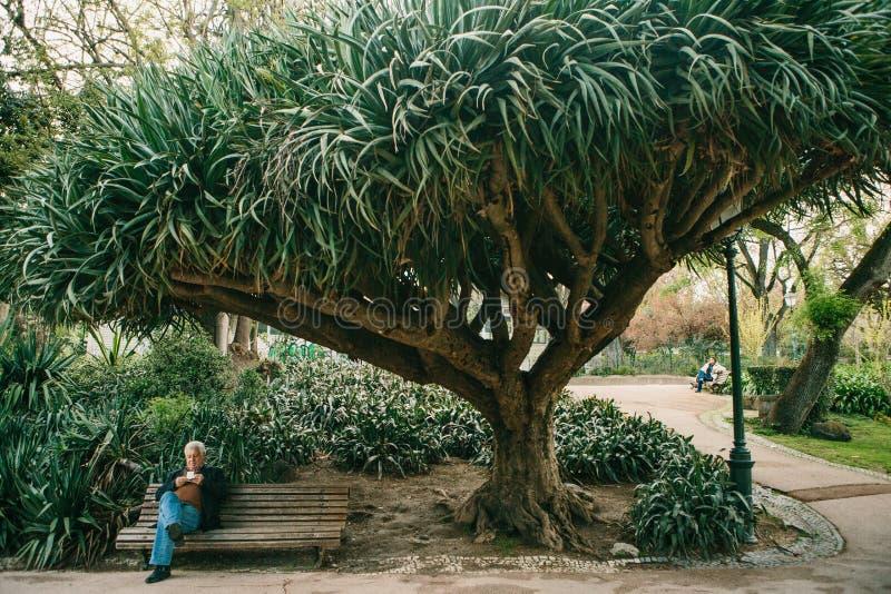 Lisboa, Portugal 01 pode 2018: povos sós no jardim sob árvores O homem só espera suas mulher e espera pelo conhecimento foto de stock