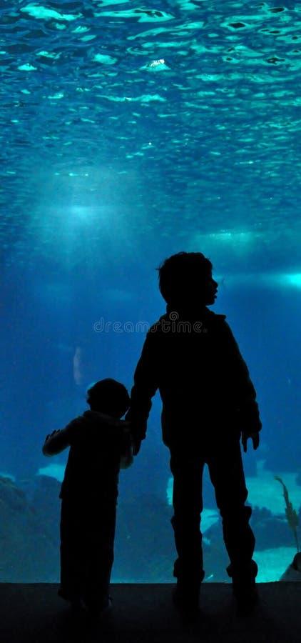 Download Lisbon Oceanarium Editorial Photo - Image: 17224601