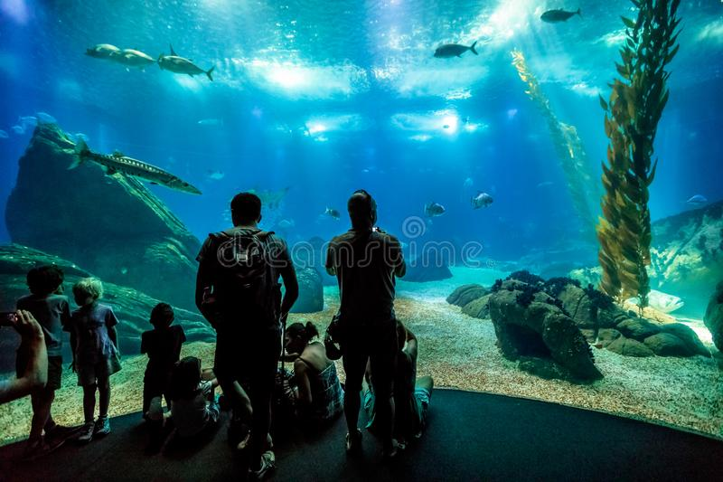 Family at Lisbon Oceanarium royalty free stock image