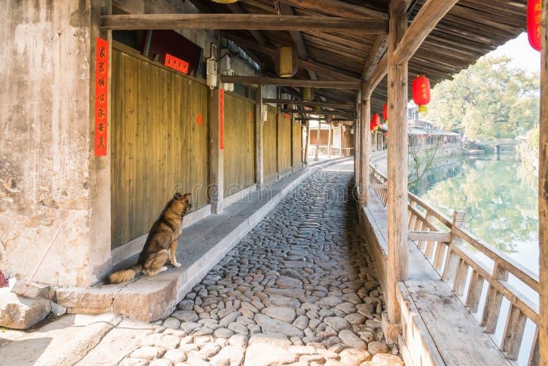 Lishui ancient street and dog stock image