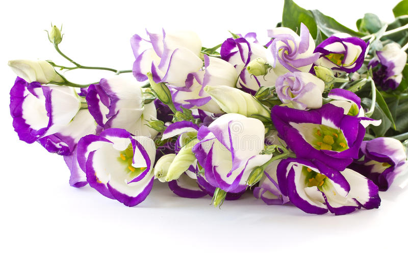 Download Lisianthus 库存图片. 图片 包括有 五颜六色, 花束, 纤维, 开花, 装饰, 颜色, 植物群 - 22350041