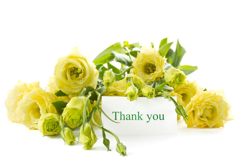 Download Lisianthus stock photo. Image of lisianthus, flowering - 26649012