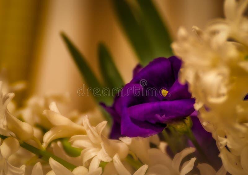 Lisianthus eustoma otaczający hiacyntem fotografia royalty free