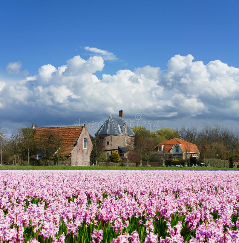 lisse цветка полей стоковое фото