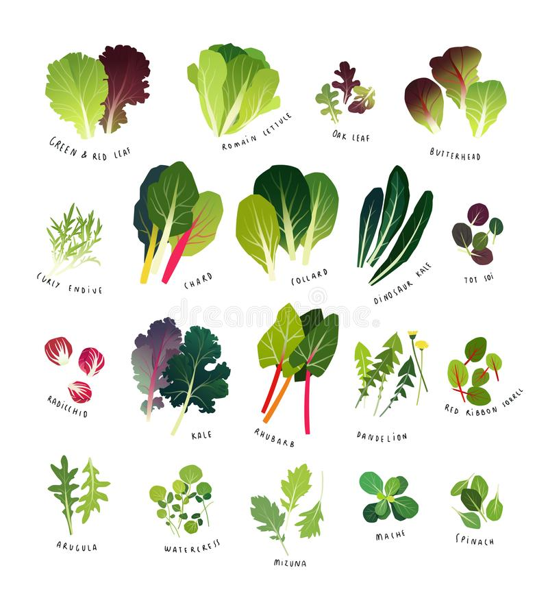 Lista completa dos verdes frondosos comuns ilustração royalty free