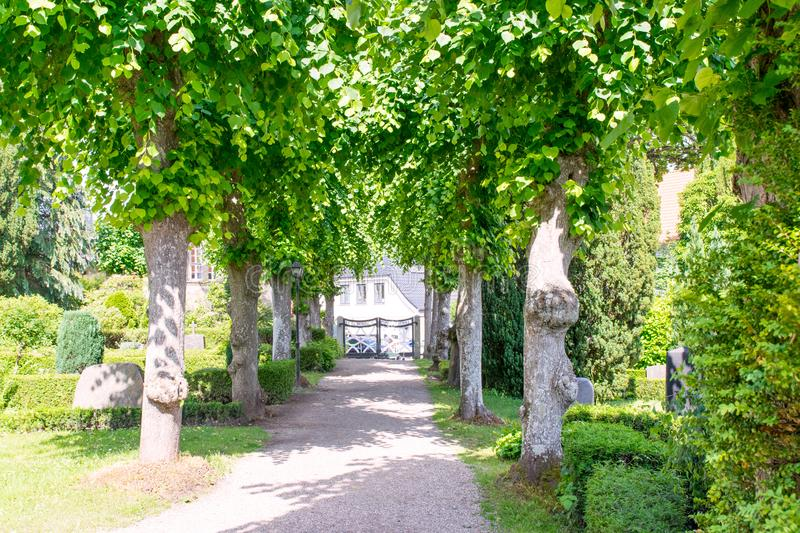 Listed lime tree avenue at the Schifferkirche to Arnis stock photography