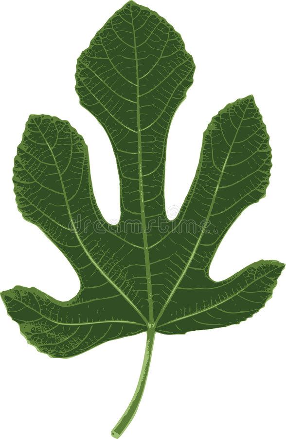listek figowy ilustracja wektor