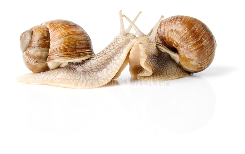 Listen to me!. Two snails isolated over white stock photo