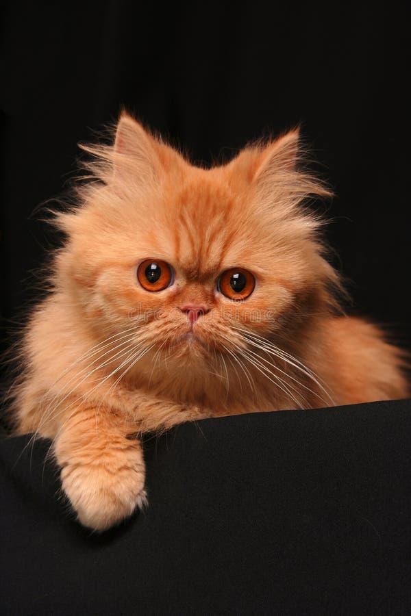 Listige kat royalty-vrije stock afbeelding