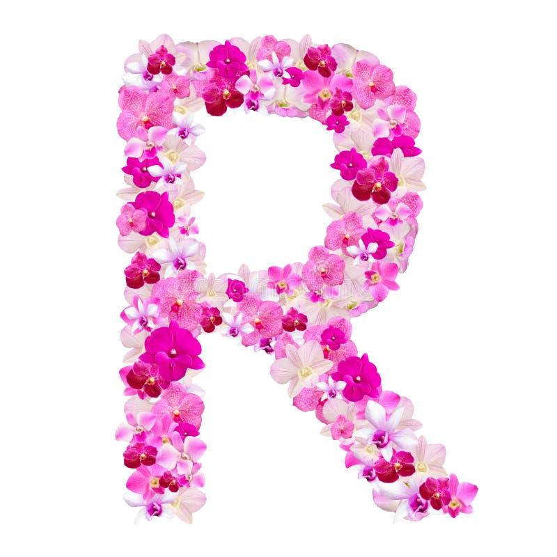 Listowy R od orchidea kwiatów odizolowywających na bielu zdjęcie stock