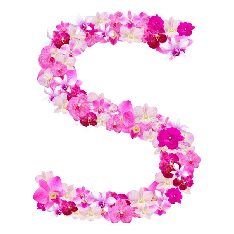 Listowy S od orchidea kwiatów odizolowywających na bielu obraz royalty free