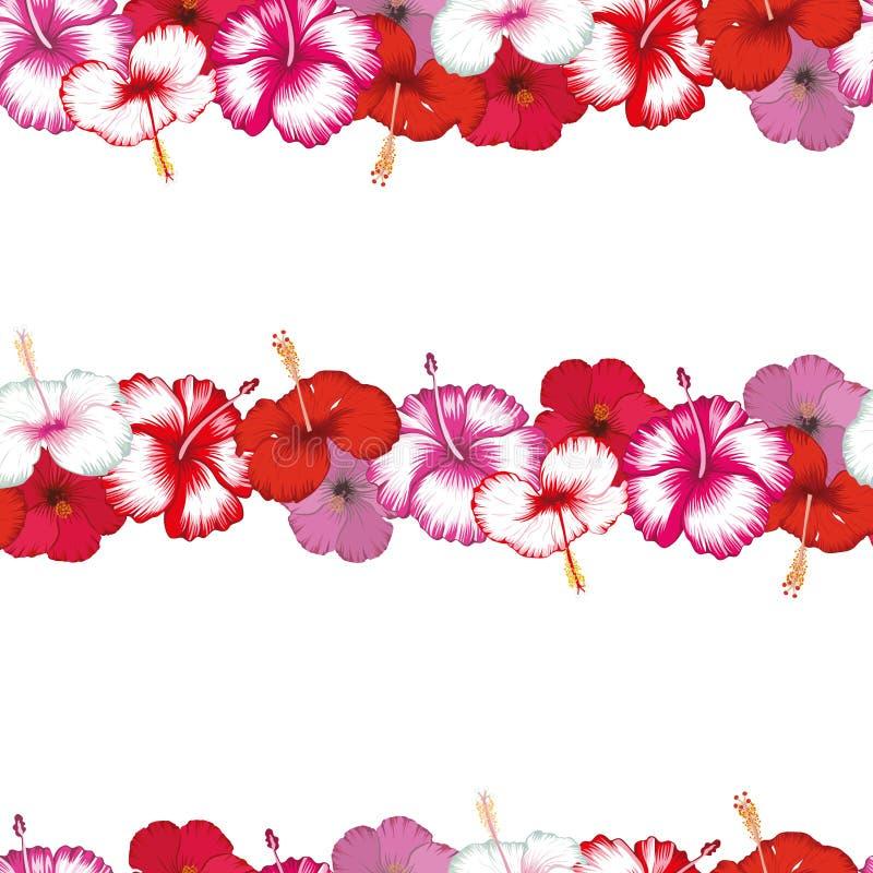 Listras ex?ticas dos hibiscus das flores brancos ilustração royalty free