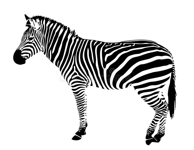 Listras isoladas do preto do vetor da silhueta da zebra ilustração stock