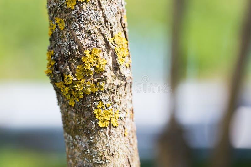 Liszaj na bagażniku owocowy drzewo na letnim dniu obrazy royalty free