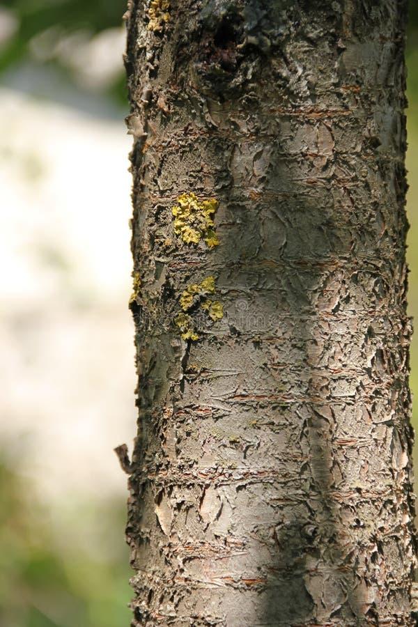 Liszaj na drzewnym bagażniku zdjęcie stock