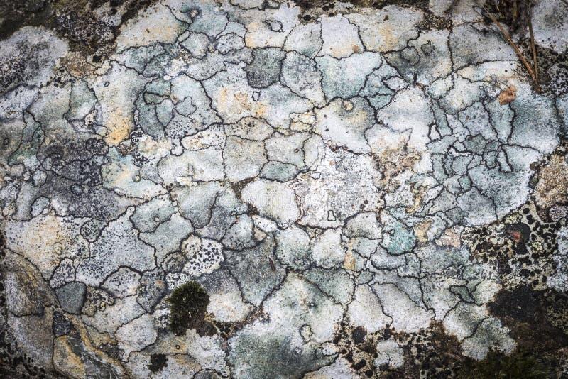 Liszaj na skale w Szkocja zdjęcia stock