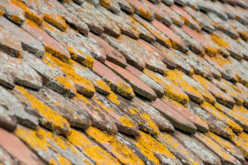 Liszaj na terra - cotta płytki na dachu obraz stock