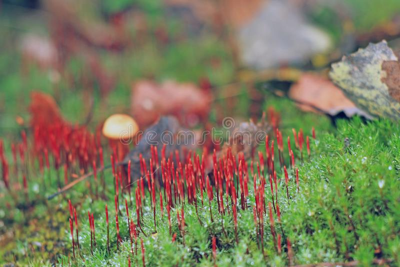 Liszaje w lesie zdjęcia royalty free