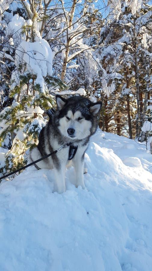 Lit canino foto de stock royalty free